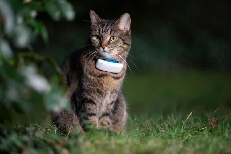 traceur pour chat