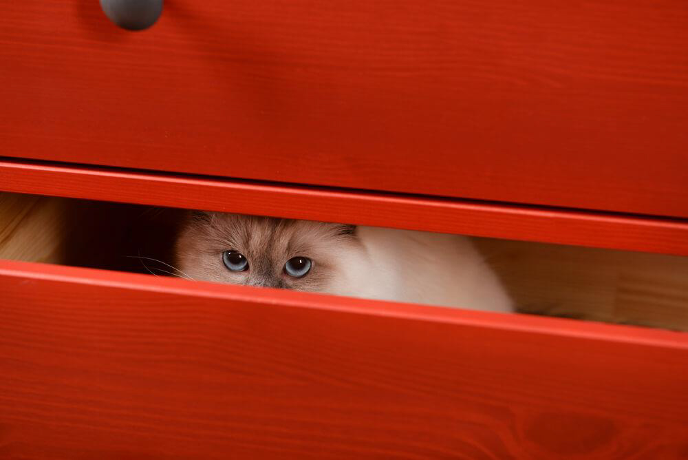 retrouver chat perdu dans la maison